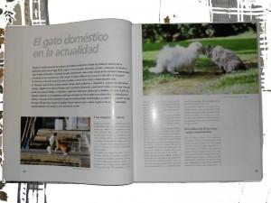 Enciclopedia del gato Protectora SOS Sagunto 2