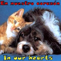animales adoptados SOS Sagunto