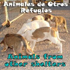 adopción animales otros refugios sos sagunto