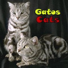 adopción gatos SOS Sagunto