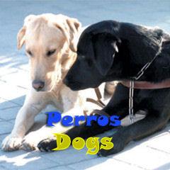adopción perros sos sagunto