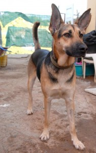 Perros en adopcion LOBO