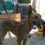 Rudi, perrete para ser adoptado tan pronto como sea posible!!