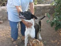 Duna, perra en adopción en SOS Sagunto