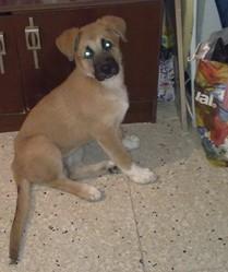 Kira adoptada