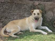 Cariñosa e inteligente perra en adopción
