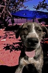 Tara, perra para ser adoptada