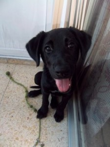 Machos en adopcion costner