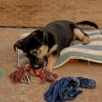 Machos en adopción mambo