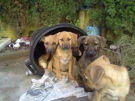 Machos en adopcion cachorros eslida