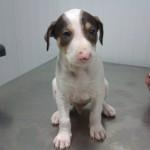 Machos en adopción cachorros neska