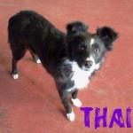 Hembras en adopción thais
