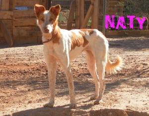 Hembras en adopción nati
