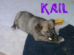 Machos en adopción kail