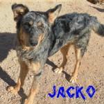 Machos en adopción jacko