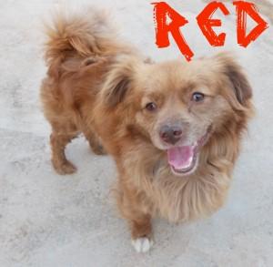Machos en adopción Red