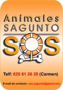 contacto-adopcion-animales-perros-protectora-valencia-espana