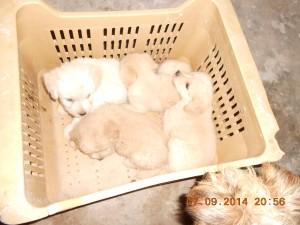 cachorros cajon 9-2014 (3)