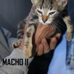 MACHO II